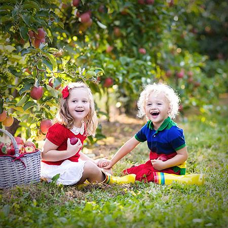 1000 Apfelbäume für Kitas